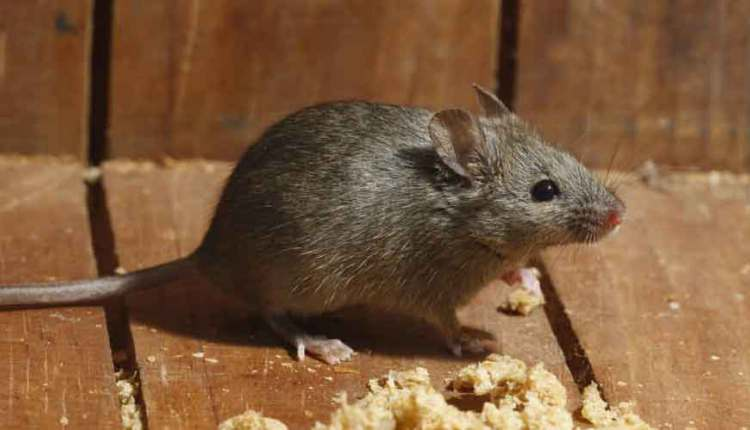 افضل شركة لمكافحة الفئران و الثعابين