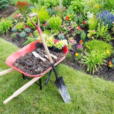زراعة حدائق من المستضيف العربىزراعة حدائق من المستضيف العربى