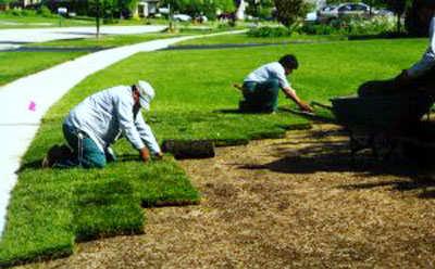 زراعة و تنظيف الحدائق من المستضيف العربى